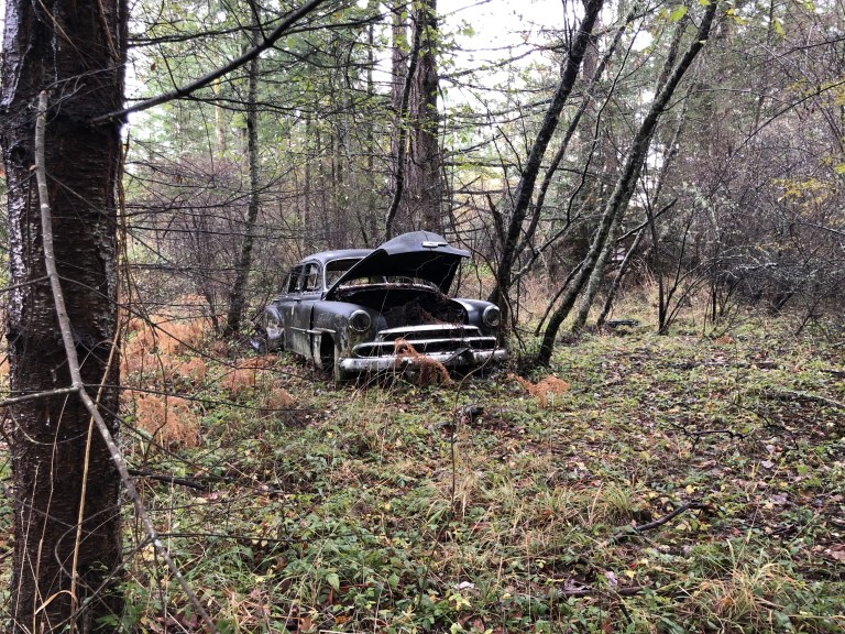 teds-car-in-the-woods