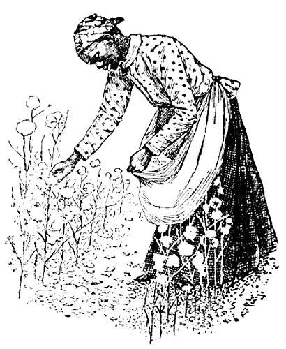 cotton-plantation-2